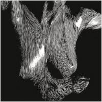 OCEANSIZE - Self Preserved While The Bodies Float Up [Ltd.] (DIGI)